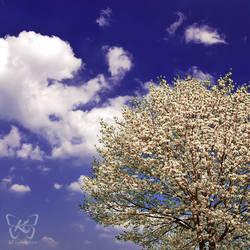 when spring kiss the sky by kyokosphotos