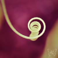 swirl II by kyokosphotos