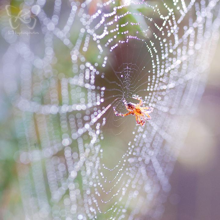 hello little spider by kyokosphotos