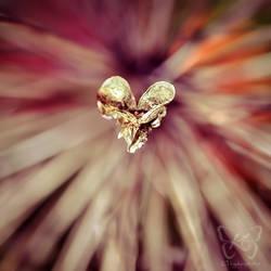 Straight Through My Heart by kyokosphotos