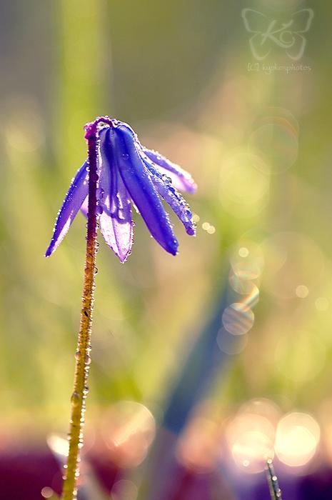 ready for spring by kyokosphotos