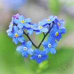 All for love by kyokosphotos