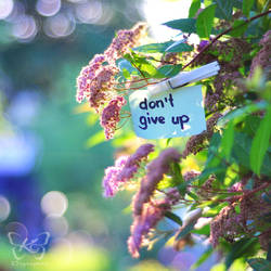 dont give up by kyokosphotos