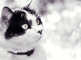 black or white by kyokosphotos