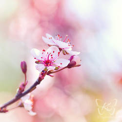 sweet flower times by kyokosphotos
