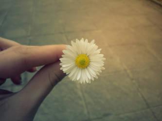 Daisy by siqna333
