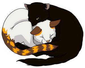 comm - Cats snuggling