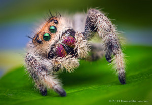 SpectacularSpiders's Profile Picture
