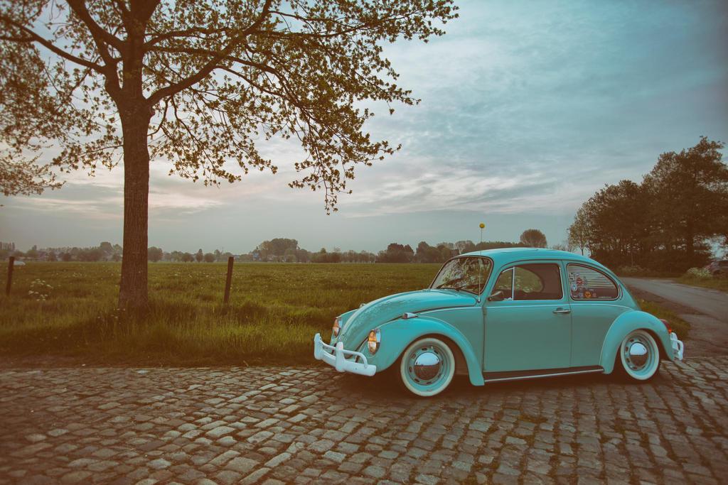beetle by APPELBOOM
