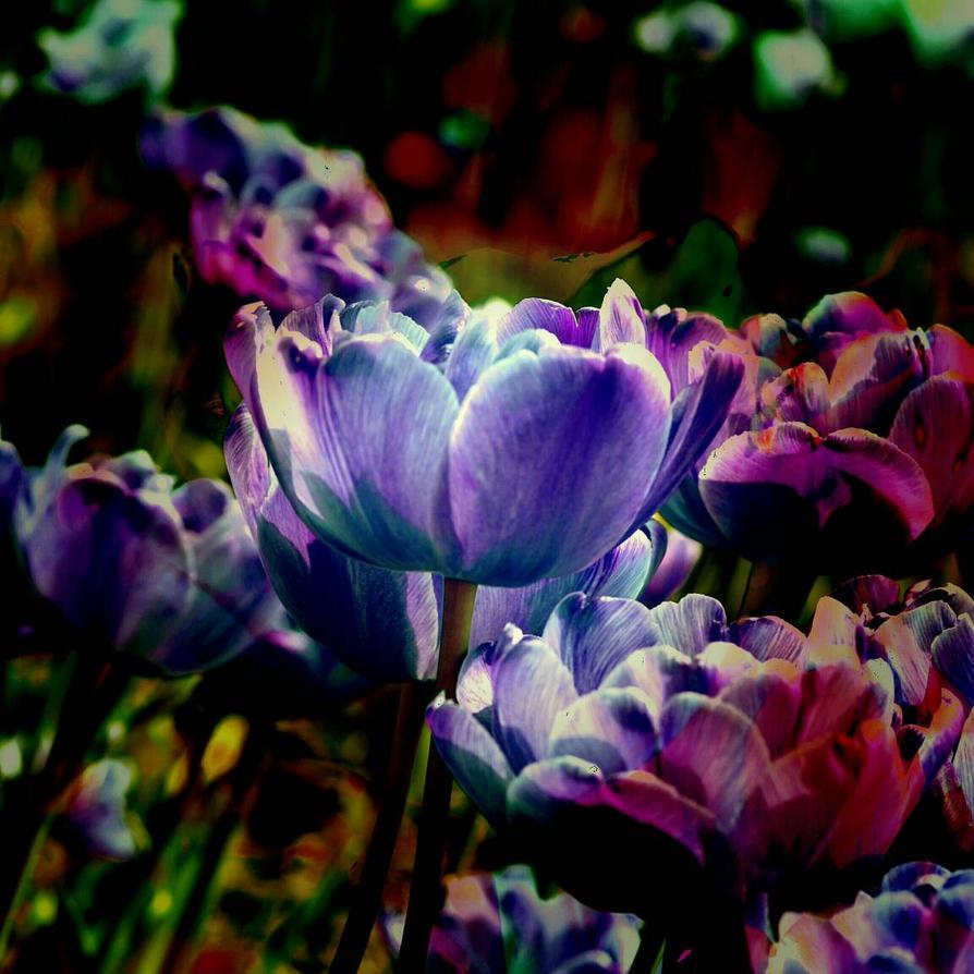 radiant garden. by artemissere