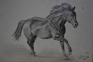 gallop. by PinkDramaQueen