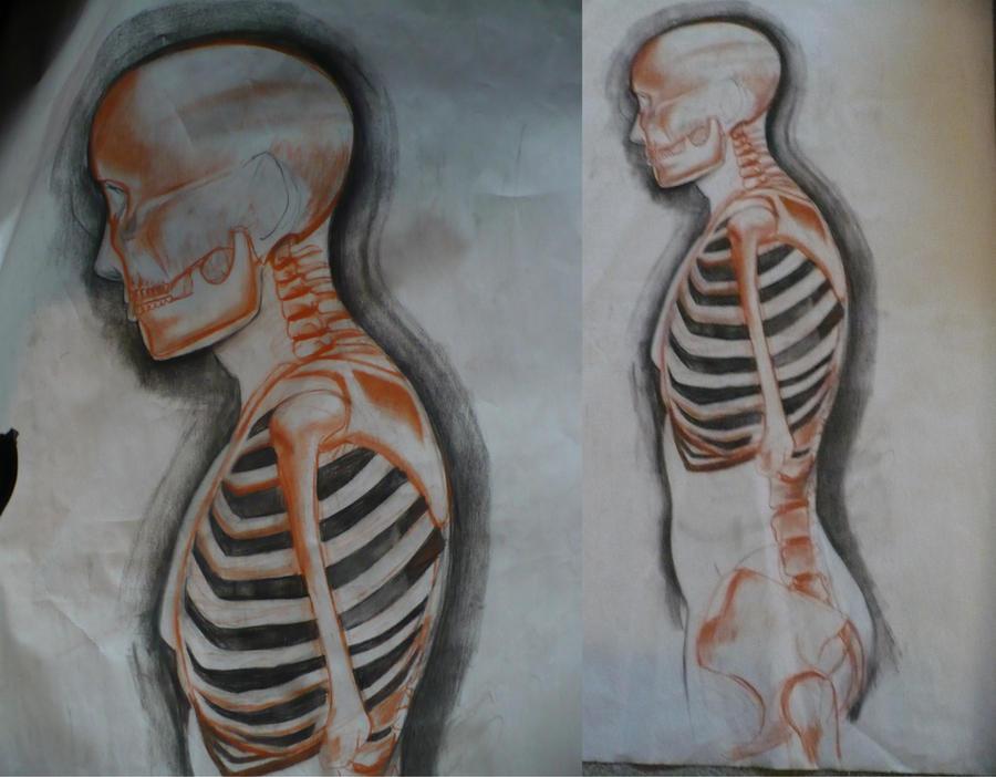 Skeleton for anatomy class