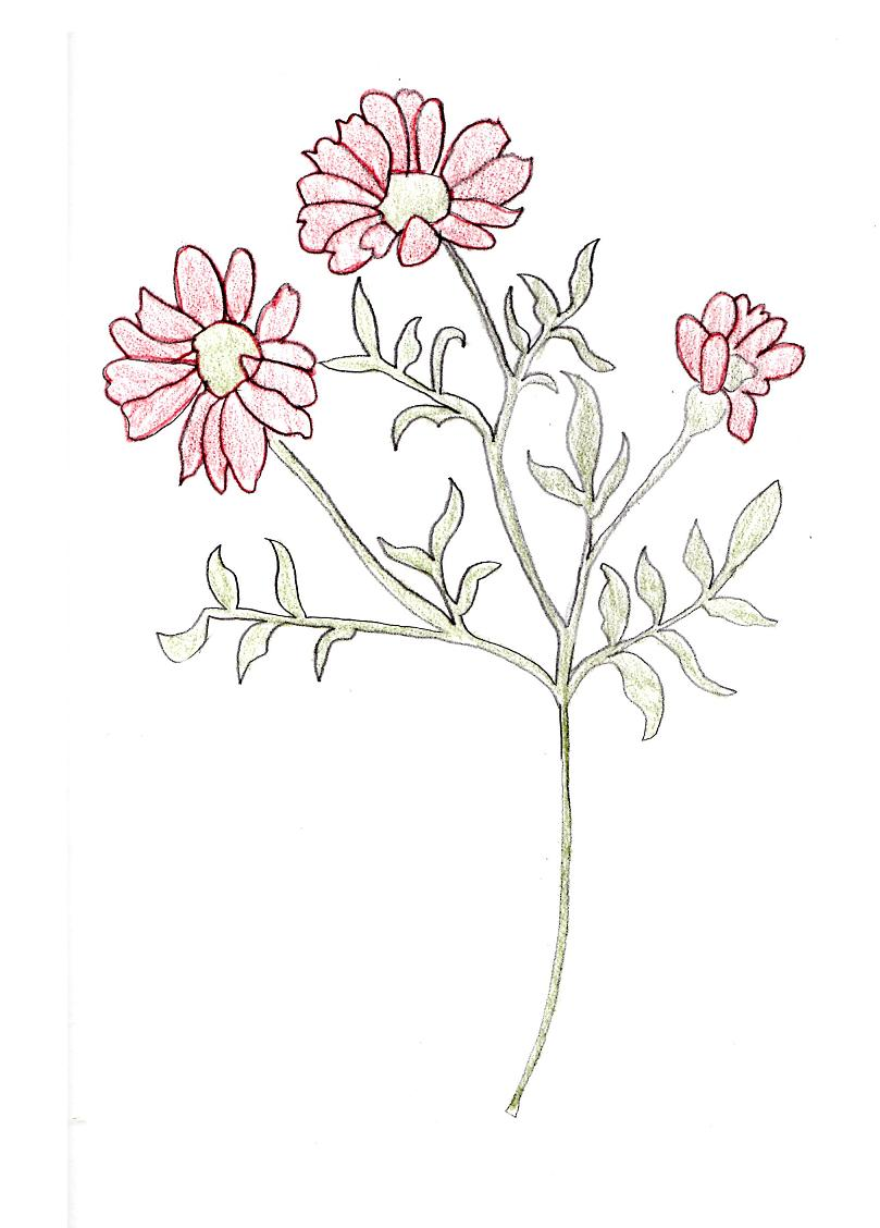 Flowers sketch by booksprout on deviantart for How to draw a cute flower