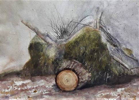 Stump study