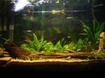 Aquascape -  Amazon tank