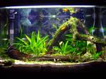 Aquarium Progressed