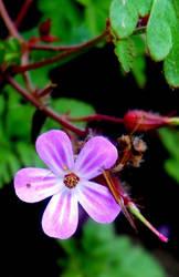 Purple Flower by LastMimzy101
