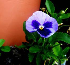 Blue Flower by LastMimzy101