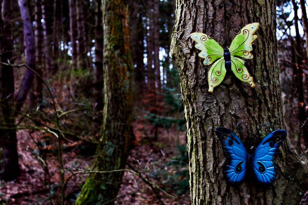 Butterflies by MortenNL