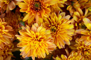Flowers for Fall