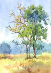 Colour sketch of trees