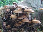 Mushroom 31