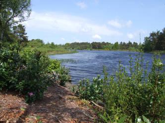 Lake View II by TimeWizardStock