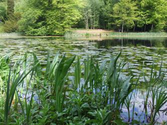 Lily Pond 1 by TimeWizardStock