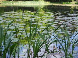 Lily Pond 2 by TimeWizardStock