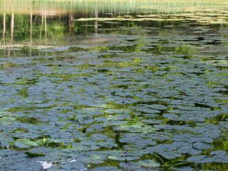 Lily pond 5 by TimeWizardStock