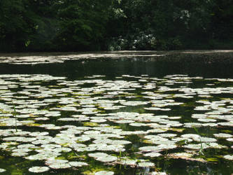 Lily Pond 6 by TimeWizardStock