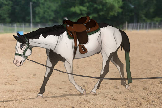 Zila's Journal: Lunging Time!