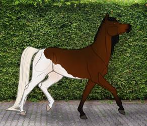 GOR Izzy Fine by Oak-Horses