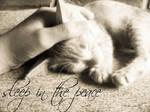 Sleep in the Peace