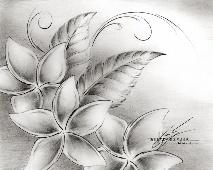 Hawaiian Flowers Drawings Joy Studio Design Gallery Best
