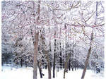 snow in Missouri