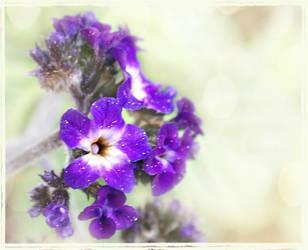 pollen on blooms by duckpondevans
