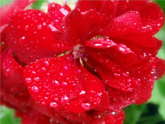 red rain by duckpondevans