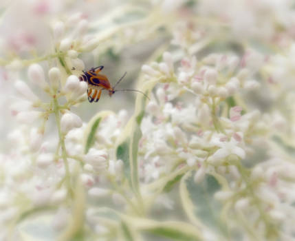 bug in the shrubs