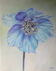 Blue Poppy by andylloyd