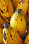 Fresh Banana by putradharma93