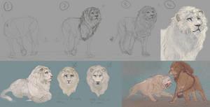 Sketching lions