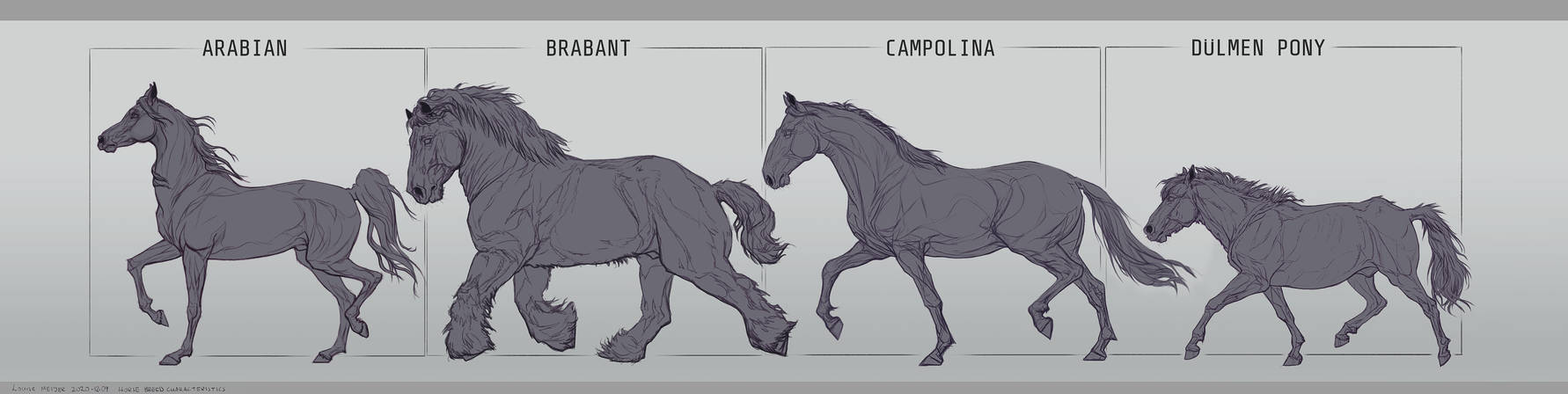 Horse breeds A, B and C