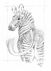 Grevy's Zebra Card Sketch