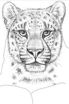 Amur Leopard Card Sketch