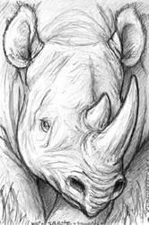 Black Rhino Card Sketch by endangeredark