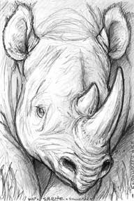 Black Rhino Card Sketch