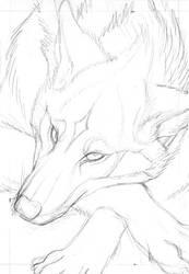 Red Wolf Card Sketch by endangeredark