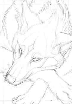 Red Wolf Card Sketch