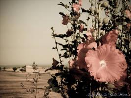 Sunny Blooming II by InfyFliesInYourHeart
